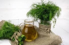 Minyak Zaitun Untuk Memanjangkan Rambut minyak zaitun untuk memanjangkan rambut tipsmerawatrambut id