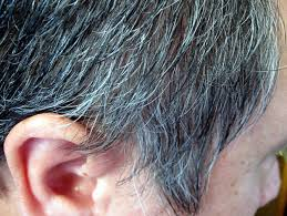 gray pubic hairs why does hair change colour and turn grey iflscience