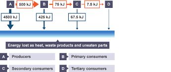 bbc bitesize gcse biology food chains revision 6