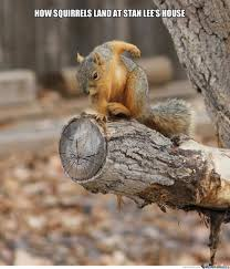 Squirrel Meme - epic squirrel by manahmanahguy meme center