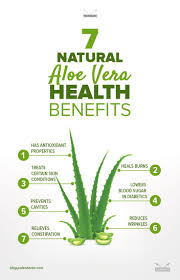 4 Biggest Benefits Of Gel 7 Natural Aloe Vera Health Benefits And Uses Paleohacks