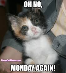 Funny Kitten Meme - kittens don t like mondays funny kitten meme