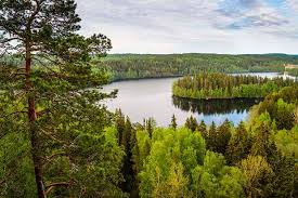 chasing charm of a summer scandinavian country is a