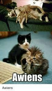 Cat Alien Meme - 25 best memes about awiens cat awiens cat memes