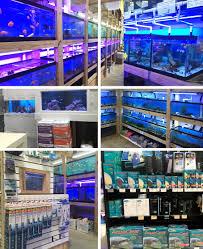 cte aquatics a baltimore tropical fish store marine fish