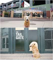 Dog Patio Pawsitively Dog Friendly Chase Field Petsmartpatio