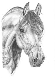 1042 best sketching images on pinterest horses horse art and