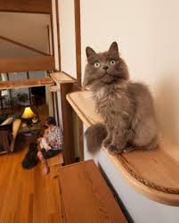 cat running into glass door i u0027catified u0027 my friends u0027 house for their 7 cats bored panda