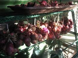 Freezing Root Vegetables - preserving food at home freezing drying salting smoking pickling
