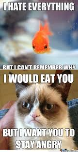 Unamused Cat Meme - angry cat meme fish cat best of the funny meme