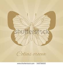 vector sketch butterfly on background texture stock vector