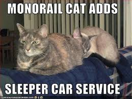 Sleeping Cat Meme - image 26561 monorail cat know your meme