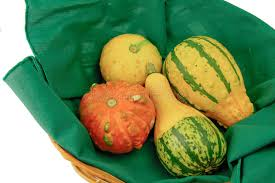 basket of ornamental squash royalty free stock images image