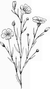 flower plant drawing best 25 plant drawing ideas on pinterest