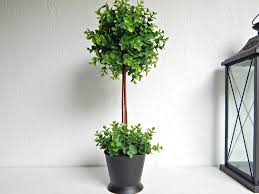 Office Plants by Two Matching Plants Faux Boxwood Topiary Office Plants