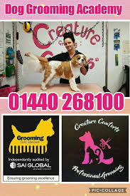 Creature Comforts Grooming Creature Comforts Grooming Service Home Facebook