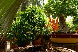 Nong Nooch Tropical Botanical Garden by Visit To Nong Nooch Tropical Botanical Garden Blog By Audun Engesbak