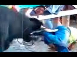 imagenes impactantes que os gustara tremendas imágenes impactantes youtube toros bravos pinterest