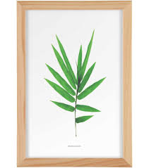 botanical prints get them for free everything you need to