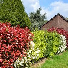 Pflanzen Fur Japanischen Garten Schöne Früh Und Sommerblühende Heckenpflanzen Für Ihren Garten