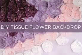 paper backdrops diy tissue flower backdrop evite