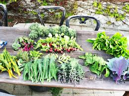 Vegetable Garden Preparation by How To Prepare Your Garden For Spring Planting