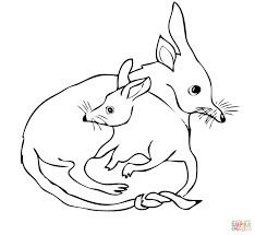 bilby mom with bilby baby coloring page free printable coloring