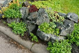 Succulent Rock Garden Image Rock Garden With Succulent Plants 556048 Images And