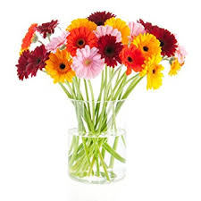gerbera bouquet bloomsybox flowers for delivery gerbera daisies