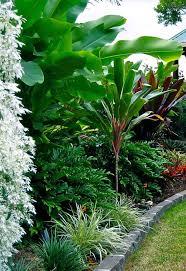 Tropical Gardening Ideas Ideas About Tropical Gardens Gardening Newest Beautiful Bananas