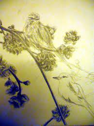 drawing of birds