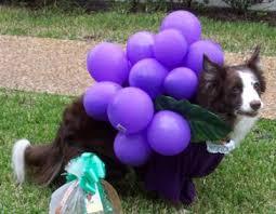 Halloween Grape Costume Halloween Pet Costume Fruit Loom Purple Grapes
