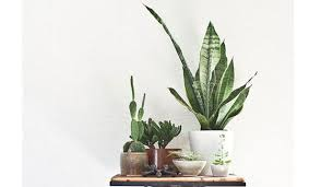 indoor plants nz six houseplants you ll find difficult to kill stuff co nz