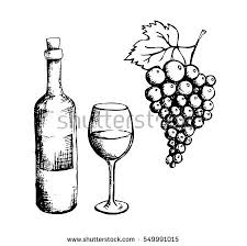 sketch wine bottle glass grapes stock vector 549991015 shutterstock