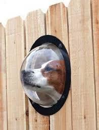 backyard dog fence ct outdoor