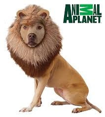 Star Wars Dog Halloween Costumes Amazon California Costumes Animal Planet Lion Dog Costume