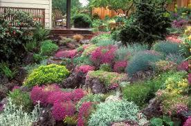 a pretty rock garden idea with colorful alpine plants