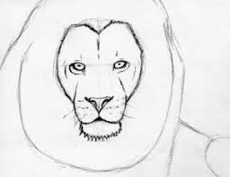 how to sketch a lion step by step safari animals animals free