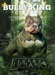 american pitbull terrier a legacy in gameness bully king magazine u0027s posts this is bully
