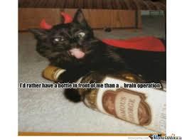 Drunk Cat Meme - drunk cat by lolabunny413 meme center