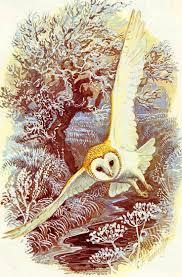 1155 best owl drawings images on pinterest owl drawings owl