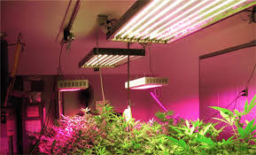 plant light for weed grow lights tips and secrets the weed scene