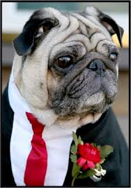 dog ring bearer pillow ring bearer dog wedding gallery
