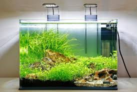 Plants For Aquascaping Aquarium Gardens Online Aquarium Plant Specialist Supplier