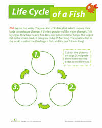 life cycle of a fish worksheet education com