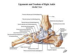 Tibiofibular Ligament Injury Closed Ankle Injuries