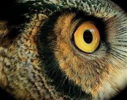 hungry owl project