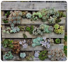 Vertical Wall Garden Plants by 50 Best Succulent Garden Ideas For 2017