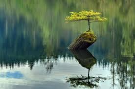 tiny tree on a log in a lake pic randommization