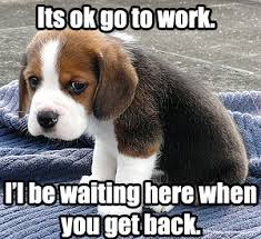 Cute Puppy Memes - funny pictures petdepotdirect ie